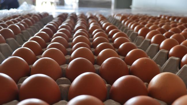 Image result for real eggs