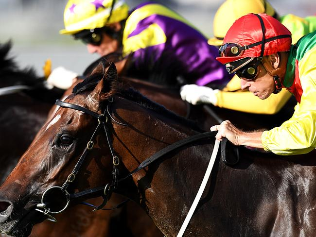 Top marks: Malvern Estate (outside) scores narrowly at Doomben. Picture: Grant Peters, Trackside Photography