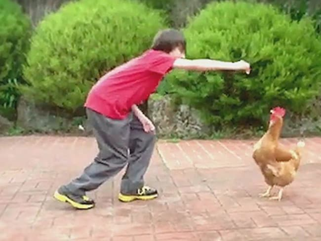 Chickens don't just have feelings... they can also jump and interact. Picture: Animals Australia.