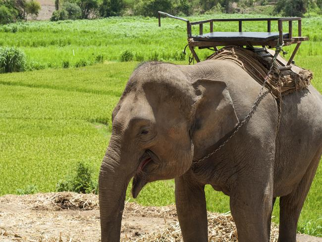 The beautiful elephants of Chiang Mai.