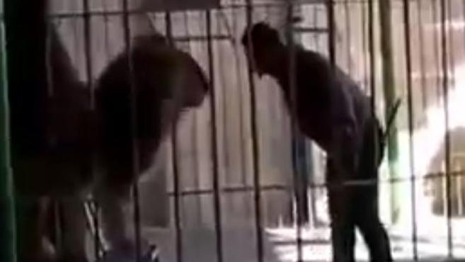 The circus worker stands nose to nose with the colossal beast in the start of the video. Picture: Liveleak