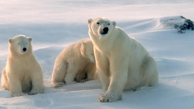We're not polar bears ... air conditioning is set to suit a 70-kilogram, 40 year old male. Picture: Thinkstock