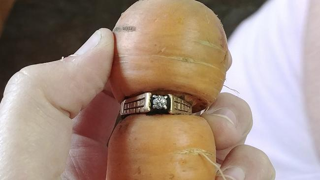 The misshapen carrot, complete with Mary Grams's formerly lost diamond ring.