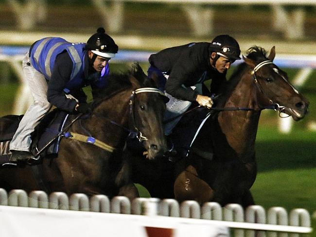 Jabali, ridden at trackwork by Damian Oliver (black), has drawn the coveted rails barrier. Picture: Michael Klein.