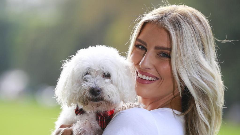 Where In Adelaide Can I Buy A Maltese Dog