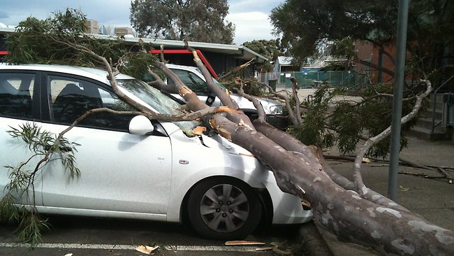 Wild winds felled three trees on to three cars at Eltham High School as the school went into lockdown this afternoon.