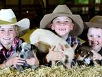 <h2>Animal attractions</h2>The Animal Nursery was introduced in 1964 and is still one of the most popular attractions with puppies, ducks, lambs and many more. Rubi, 9, James, 7, and Rory Greenup, 6, of Kingarory, sneak an early peek. Pic: Steve Pohlner