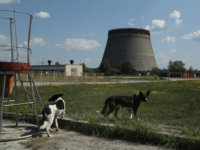 Stray dogs hang out near an abandoned, partially-completed cooling tower at the Chernobyl nuclear power plant on August 18, 2017 near Chornobyl, Ukraine. Picture: Getty