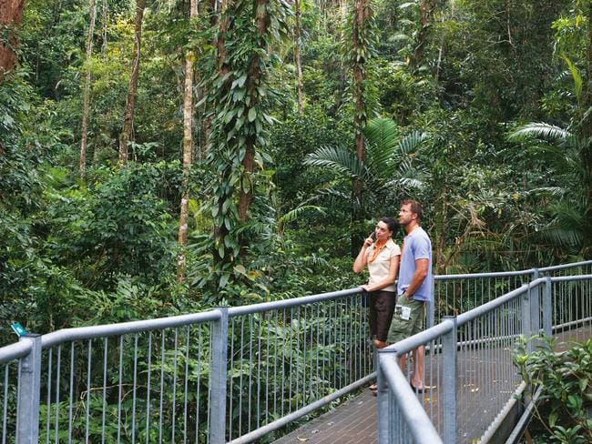 The Daintree Discovery Centre in Far North Queensland's Daintree Rainforest.