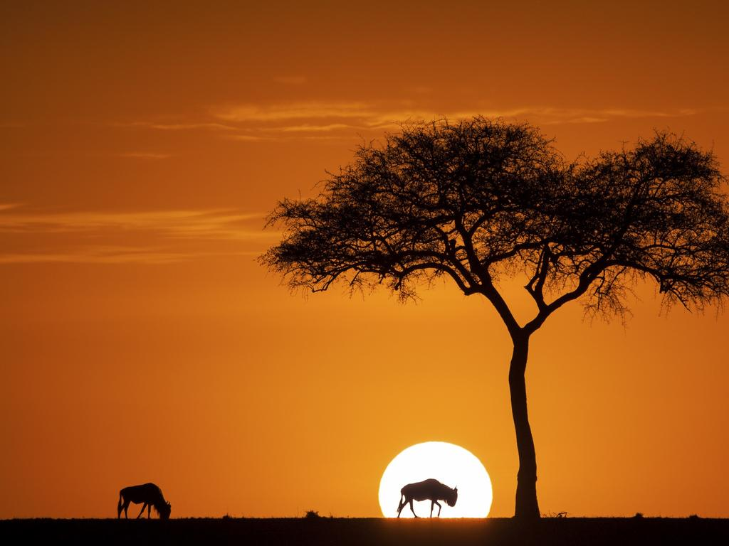 Photo by Jay ruan / National Geographic Nature Photographer of the Year contest. Sunrise of Maasia Mara. During the month of August and September, there are millions of wildebeests, zebra, and other animals in Maasia mara game reserve. On this September morning, a wildebeest eats grass intersected by the sun coming out of the horizon. It was one of the most beautiful sunrise i had seen so far.