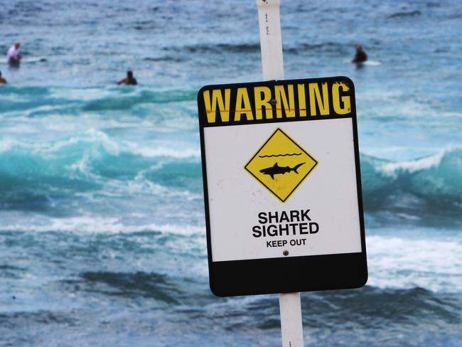 The sightings haven't deterred everyone. Pictured, surfers ignore a sign at Bar Beach in Newcastle.
