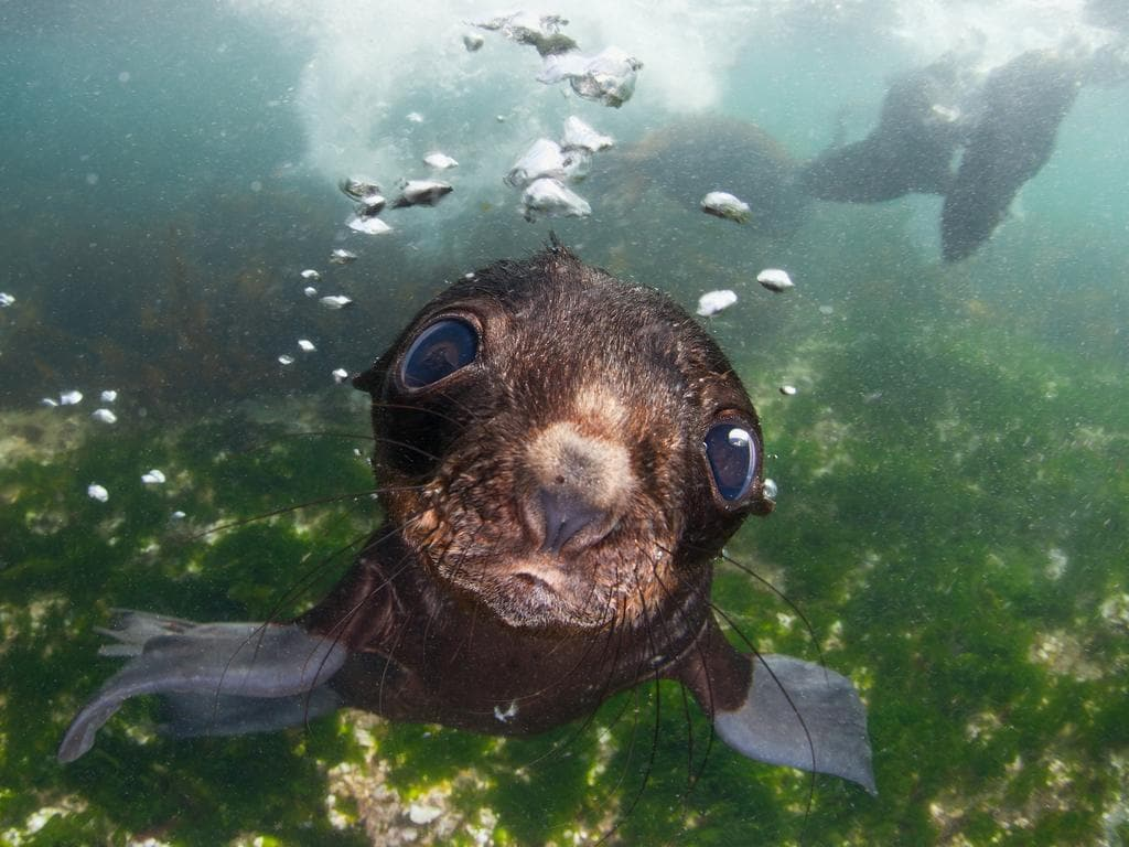 """Baby fur seal in the Commander islands."" Picture: Andrey Narchuk, Russia, Shortlist, Open, Nature and Wildlife, 2016 Sony World Photography Awards"