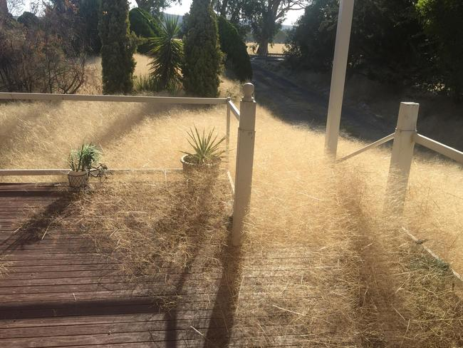 The grass constantly creeps towards the house. Picture: Leanne Gloury