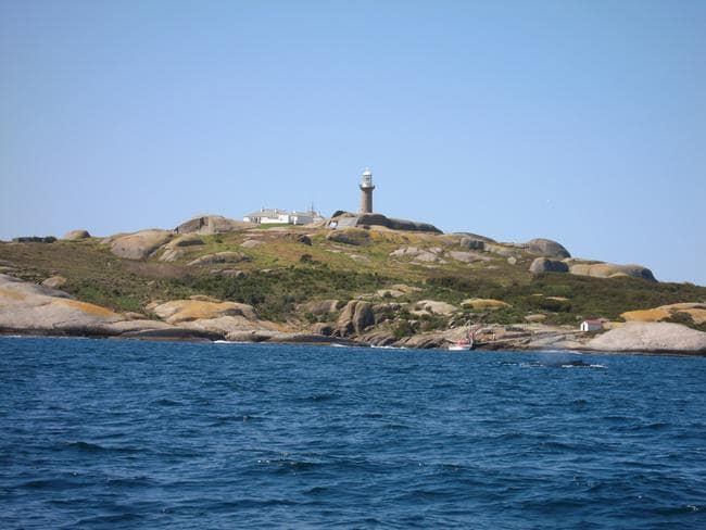 The water around rocky Montague Island attracts whales and seals. Picture: Alex Lalak