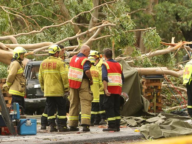 The huge tree which crushed a vehicle on Nepean Rd in Emu Plains. Picture: Rohan Kelly