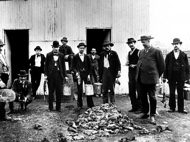 Rat catchers hired to help fight bubonic plague that hit Sydney in 1900.