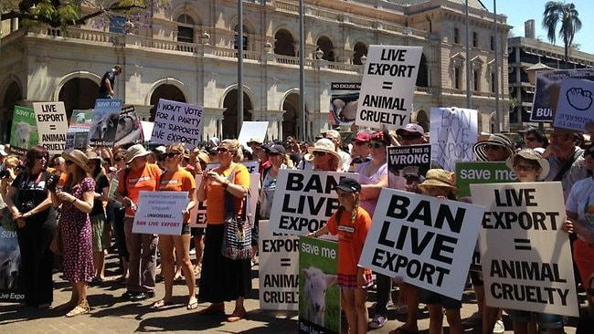 Many gather in Queensland to protest against live animal exports. Photo: Darren England