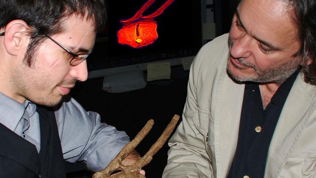 Researchers Robert A. DePalma II (left) and David A. Burnham inspect the fossil of the hadrosaur vertebrae which had a Tyranosaurus Rex tooth embedded in it.