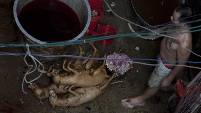 A man cleans dead dogs before they are chopped up for meat in Yulin. Picture: AFP