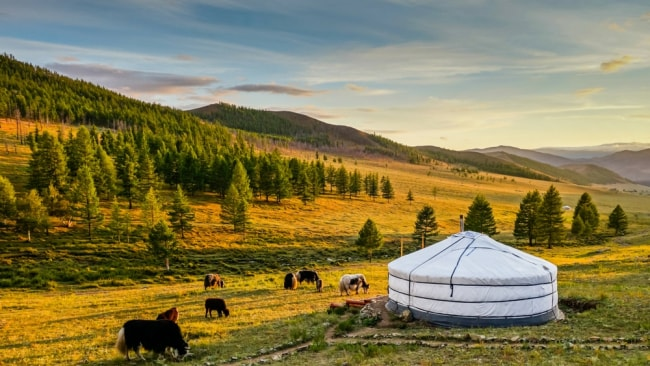 A camping site in Mongolia. Photo: Supplied