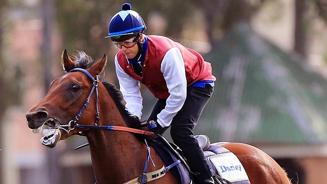 Peter Snowden is confident Guelph will run well at Rosehill Gardens. Picture: Mark Evans