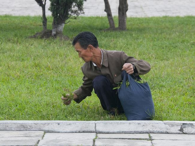 'This kind of picture is widespread in the west. The caption often explains that North Koreans eat grass from the park. The guides get furious if you take it.'