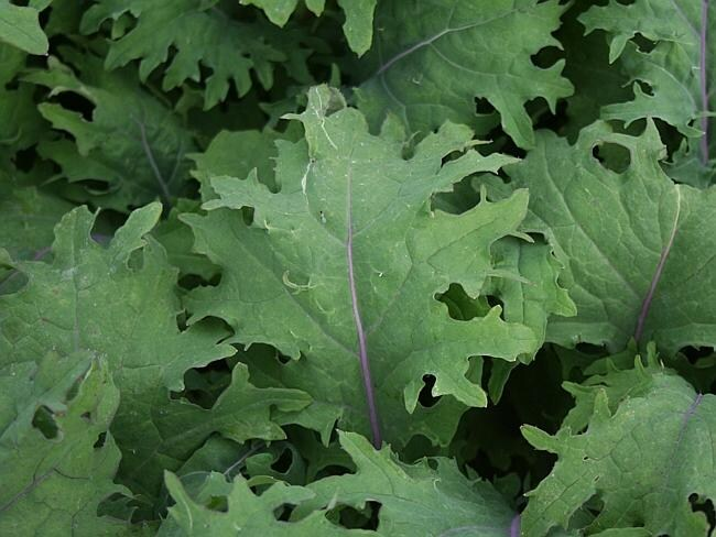 Leafy greens ... kale helps you regulate your appetite, slows down the release of the other nutrients and increases protein absorption.