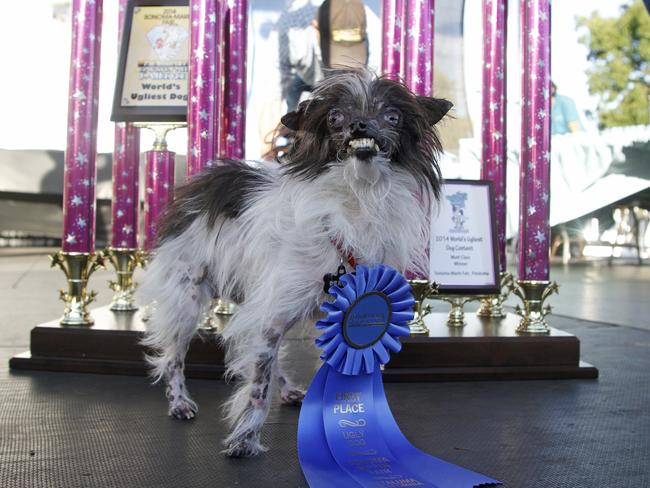 Peanut's owner plans to use the prize money to pay the vet bills of abused animals. Picture: AP
