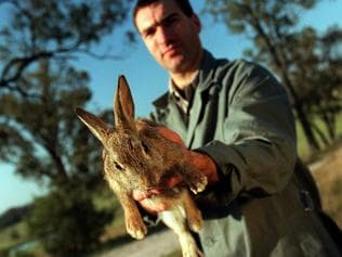 Agriculture Department research officer Adrian Philbey with a wild rabbit carrying the calicivirus disease which will be released in the outskirts of Wagga Wagga. Science / Animal / Research / Rabbits