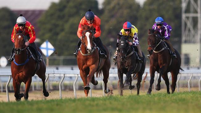 Angel Bee (far left) wins heat one of the Rosehill barrier trials — a trial which included Group 1 winners Boban, Sacred Falls, Hawkspur and Foreteller. Picture: Phil Hillyard