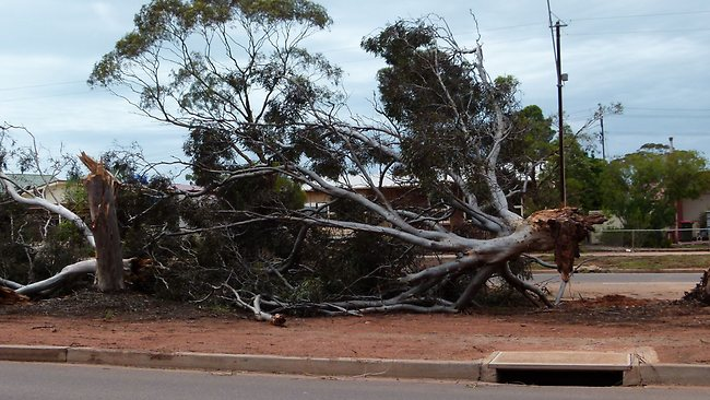 The damage included hundreds of uprooted trees Picture: Tam Phillis