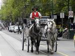 N39me527 Carriage operators feel they are being unfairly targeted by new council guidelines on carriages. Brad Males in Swanston st Melbourne , with horses Dawn , Ally
