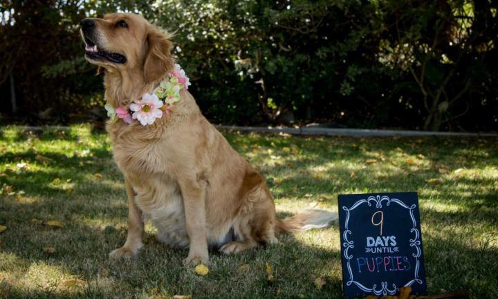 This dog maternity shoot will be the best thing you'll see all day!