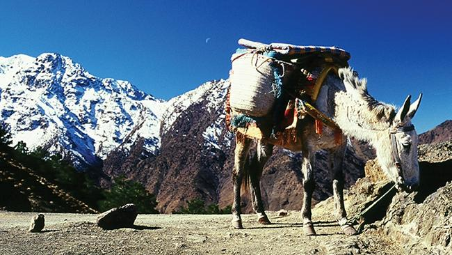 Superb views, donkeys ... life is pretty darn good high up in Morocco. Picture: Supplied