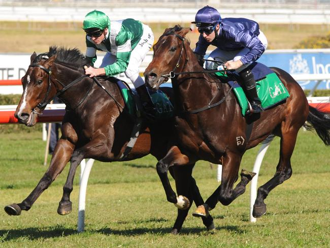 Gai Waterhouse pair Almalad and Valentia (outside) take part in an exhibition gallop between races recently.
