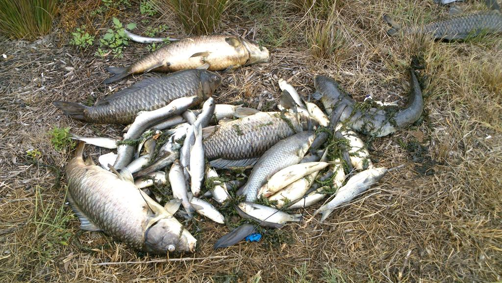 Authorities unsure of what caused hundreds of fish in ...