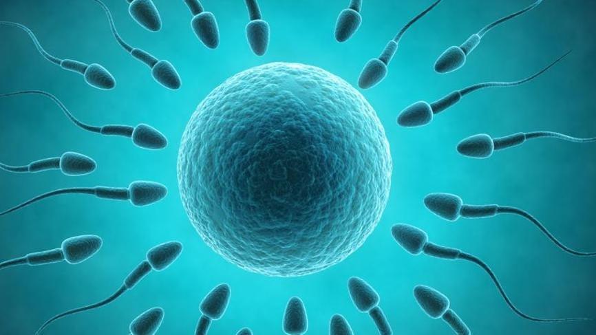Horny. Sperm donor job australia Beine, süßer