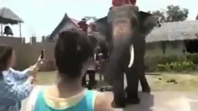 The excited women approach the elephant, phones assuming the standard 'point and shoot' position