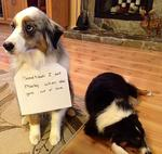 "<span>There's no room for that kind of vigilante behaviour here, leave it to the proper authorities.</span>  <span><a href=""http://dogshaming.tumblr.com/"">Dog Shaming</a> <br /> </span>"