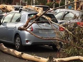 Trees have been felled by wild weather in Melbourne this afternoon. Picture: Supplied