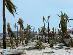 A photo taken on September 6, 2017 shows broken palm trees on the beach of the Hotel Mercure in Marigot, near the Bay of Nettle, on the French Collectivity of Saint Martin, after the passage of Hurricane Irma. Picture: AFP PHOTO / Lionel CHAMOISEAU
