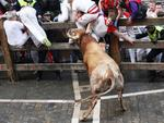 A participant is hurled up against a barrier by a Miura bull after being gored in the thigh during the last bull-run of the San Fermin Festival in Pamplona, northern Spain on July 14, 2014. The festival is a symbol of Spanish culture that attracts thousands of tourists to watch the bull runs despite heavy condemnation from animal rights groups. AFP PHOTO / INAKI VERGARA