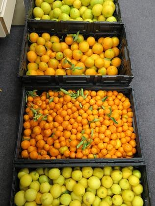 Oranges, mandarins and lemons rescued by OzHarvest. Picture: Supplied