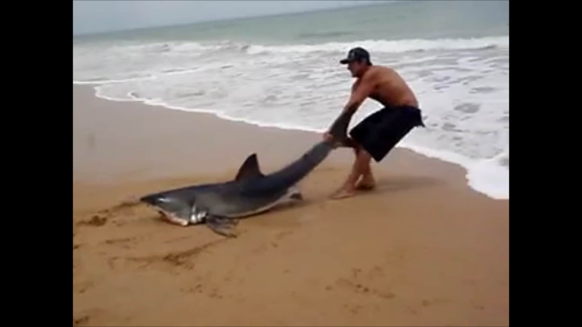 footage of man dragging shark back into the ocean by the tail goes footage of man dragging shark back into the ocean by the tail goes viral