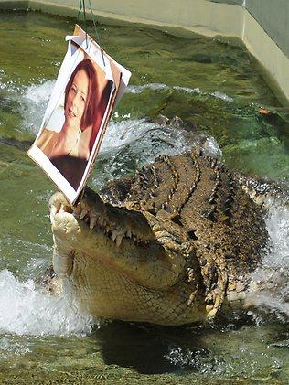 Harry The Psychic Croc picks the winner of Kevin v Julia part 2, at Crocosaurus cove Picture: Katrina Bridgeford