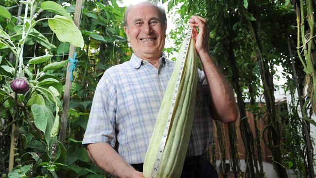 Filippone Eraldo grew this huge Italian cucumber at home in Sydney. Picture: News Corp Australia.