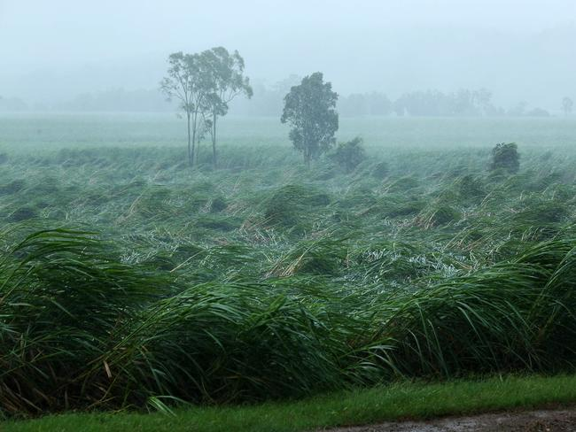 Sugar cane crops in Proserpine are blown over by Cyclone Debbie's winds. Picture: Liam Kidston.