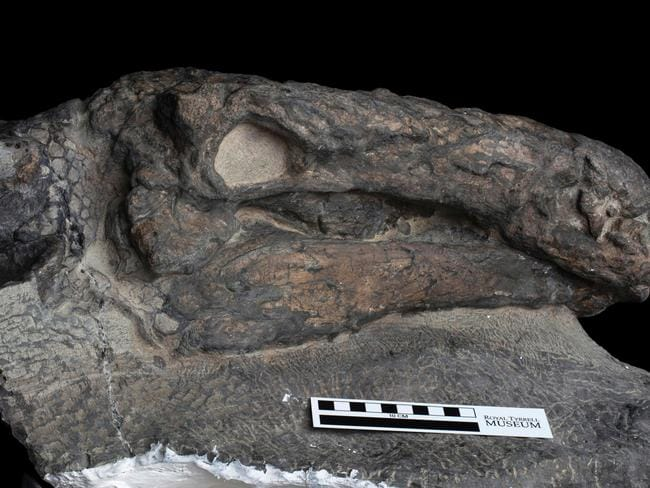 This recent handout photograph obtained August 2, 2017, courtesy of the Royal Tyrrell Museum of Paleontology shows the well-preserved head of a 110-million-year-old Borealopelta markmitchelli. Picture: Royal Tyrrell Museum of Paleontology
