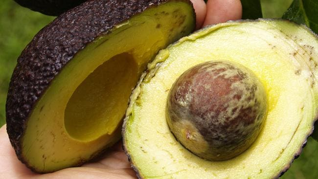 Avocado growers don't currently have the supply to keep up with the demand. Source: Supplied