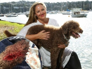 Shark attacks dog at The Spit
